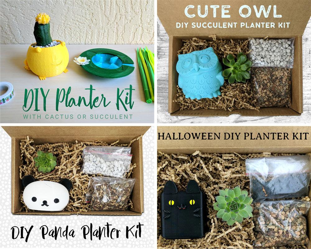 DIY Planter succulent kits