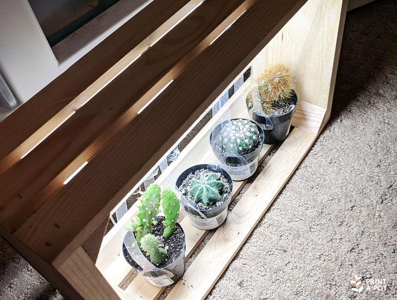 Cacti in DIY LED Light Box