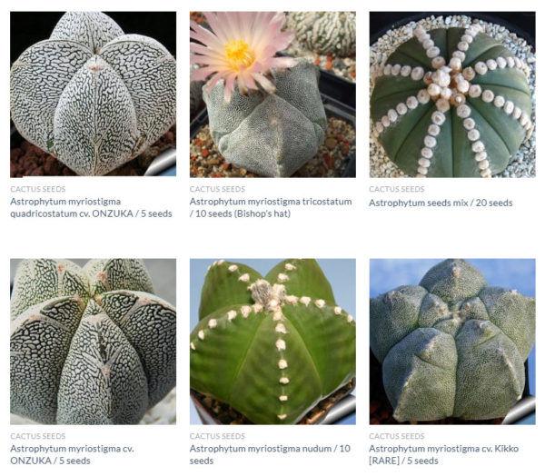 Astrophytum seeds