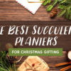 The Best Succulent Planters for Christmas Gifting