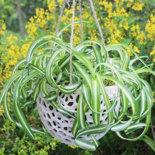 DIY Hanging Planter; Kokedama for Orchids, Succulents, Hanging Plants; DIY Hanging Planter; Orchid Pot; Unique Hanging Pot