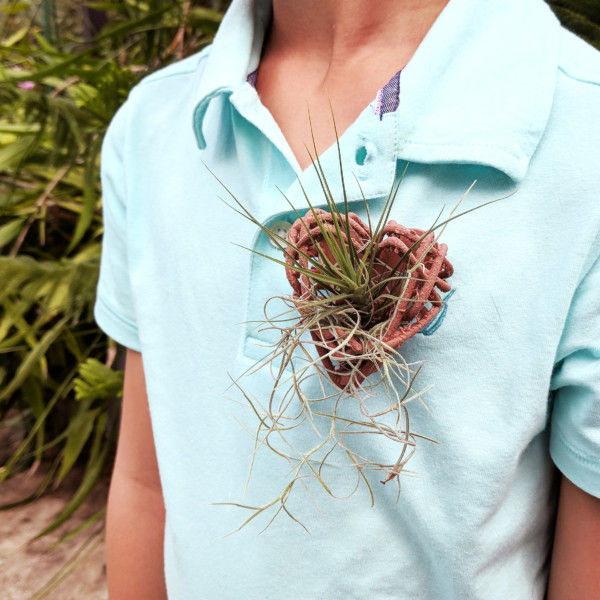 Air Plant Heart Pin as a Wedding Boutonniere, Airplant Boutonniere, Heart Pin with Magnet, Airplant Heart Brooch, gender-neutral jewelry