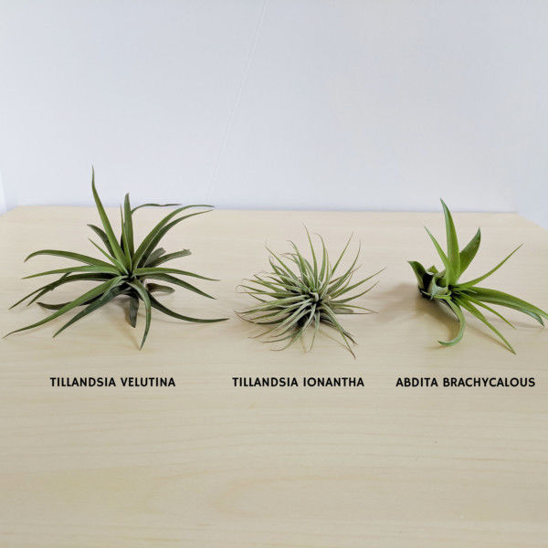 Waterfall Air Plant Holder Business Card Holder - Customizable, Air Plant Desk, Air Planter, Plant Office Gift, Personalized Office Decor