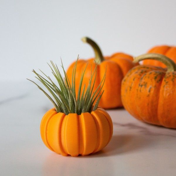 Pumpkin Air Plant Holder for Air Plant Gift, Unique Mini Air Plant Container, Pumpkin Air Planter, Small Plant Pot, Pumpkin Planter