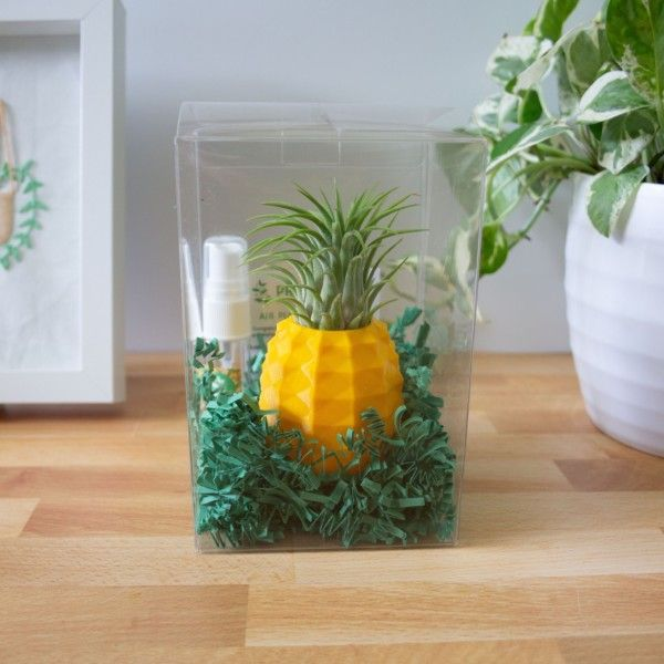 Pineapple Pot Gift Box with Air Plant & Misting Bottle, Air Plant Gift Box, Best Friends Gift, Cheer Up Gift, BFF Gift for Her