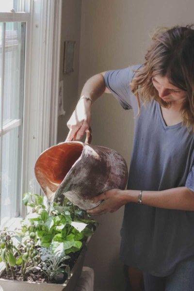 Watering an indoor herb garden