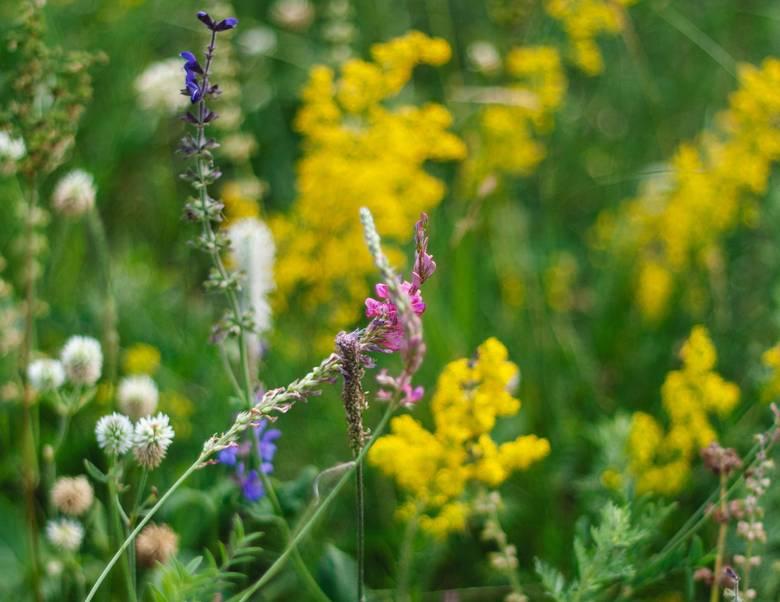 Backyard Species, Part 4: Wildflowers