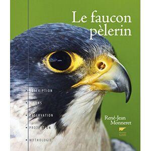 Le faucon pèlerin