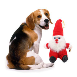 Christmas Pet Dog Cleaning Teeth Molars Santa Claus Toys Chew Squeaker Plush Toys For Dogs Biting Rope Sound Toy Pet Cat Doll