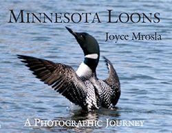 Minnesota Loons