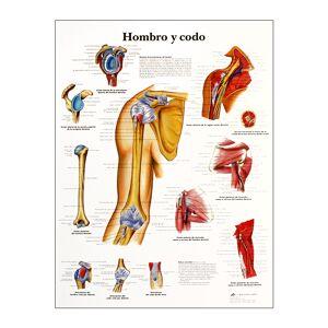 Lámina de anatomía: Hombro y codo