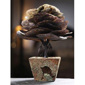 Dennmarks Brown Modern Nordic Style Jade Plant & Ceramic Pot