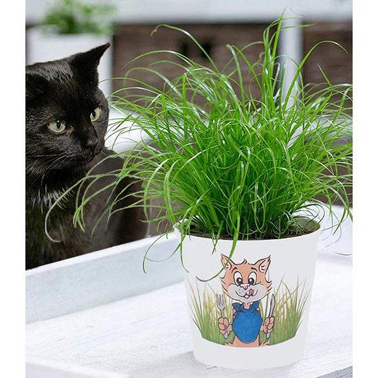 Garten-Welt Katzengras inkl. Papier-Übertopf, 1 Set grün
