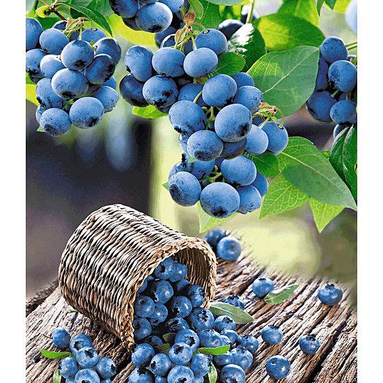 Garten-Welt Heidelbeer-Sortiment zum Vorteilspreis, 2 Pflanzen blau