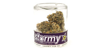 Stormy D #1 Product Image