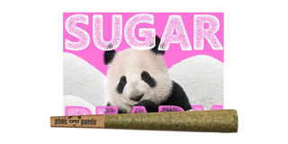 Sugar Beary Product Image