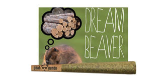 Dream Beaver Product Image