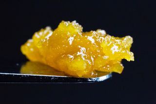 Dutch Haze Gold Product Image