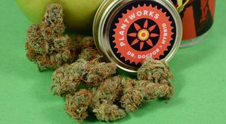 Dr. Doctor Product Image
