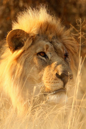 Tracking in Namibia with Ray Mears