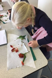 dissecting flowers