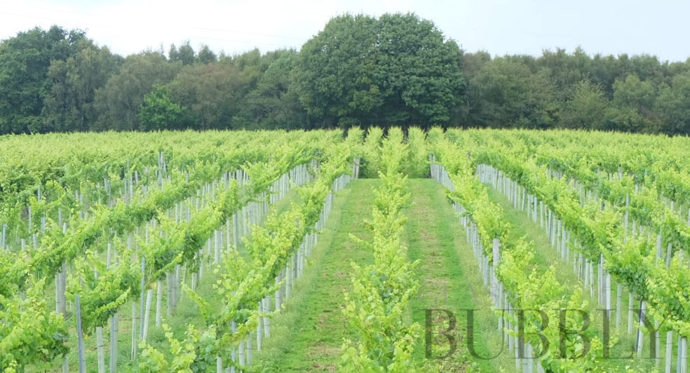 english sparkling wine tours 2019