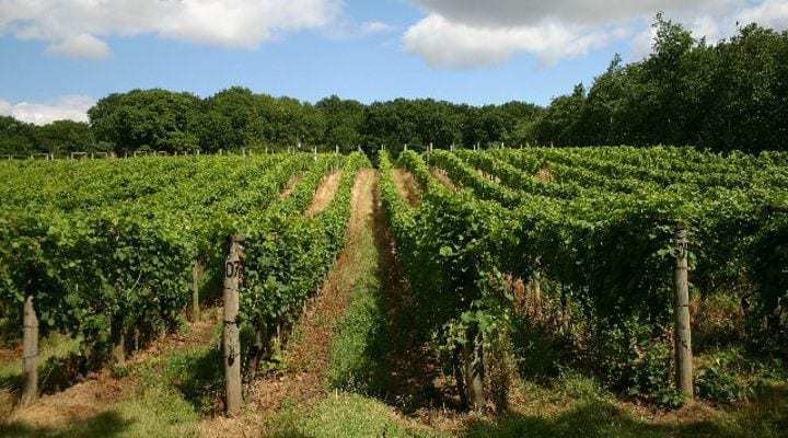 Growing popularity of English sparkling wine