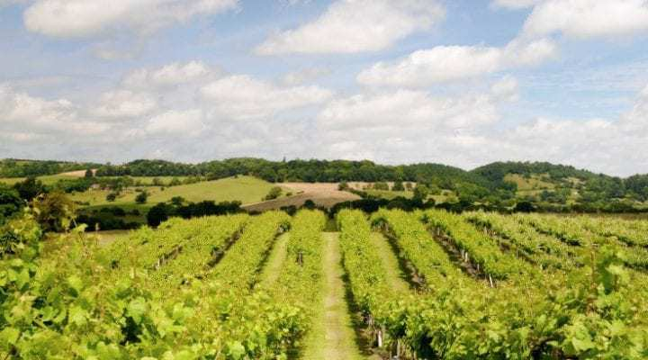 4 Beautiful Vineyards to Visit in Wales