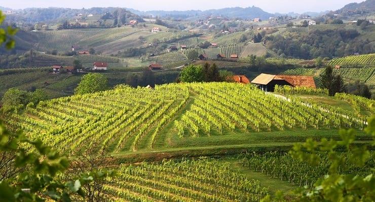 Istenic_vineyards