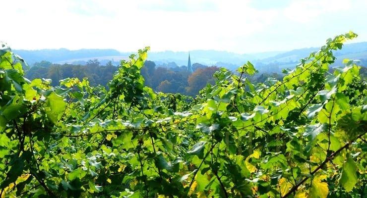 English_vineyard_view