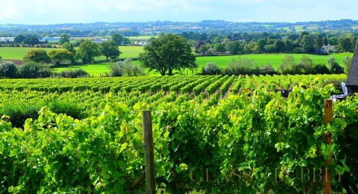 Halfpenny Green Wine Estate vines