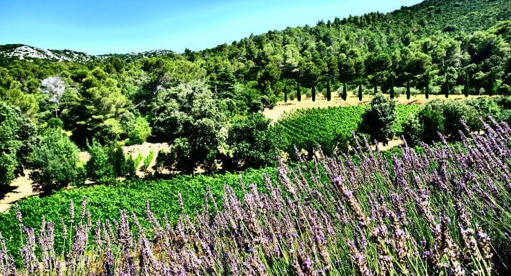 Image result for wine tourism in Languedoc-Roussillon