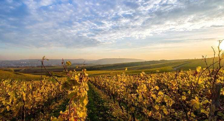 vineyard_view_Europe