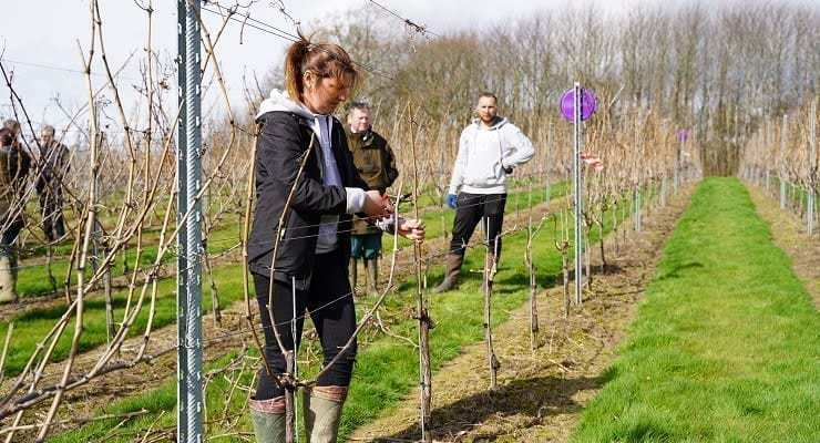 Pruning_comp_credit_Anneka_Ireland-Wolfe_featured