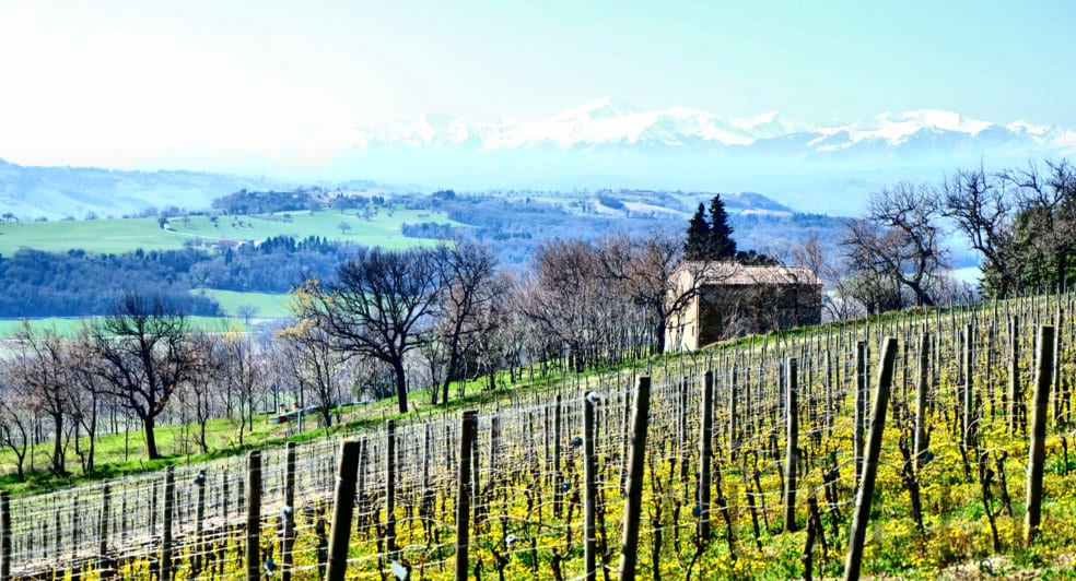 Le Marche wine region vineyards and mountains
