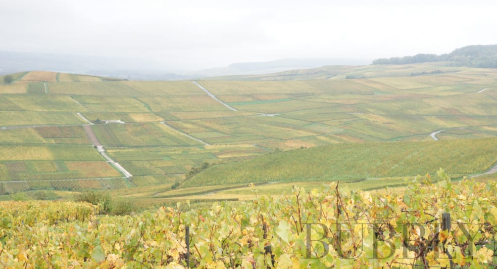 Vineyards of Ay
