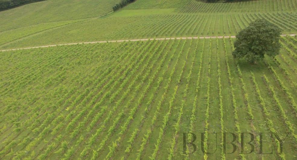 Denbies English Sparkling Wine - 265 Acre Vineyard