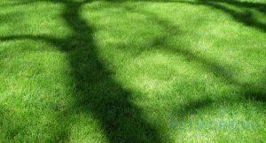 Labour Garden Tax