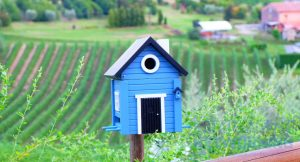 small house bird box