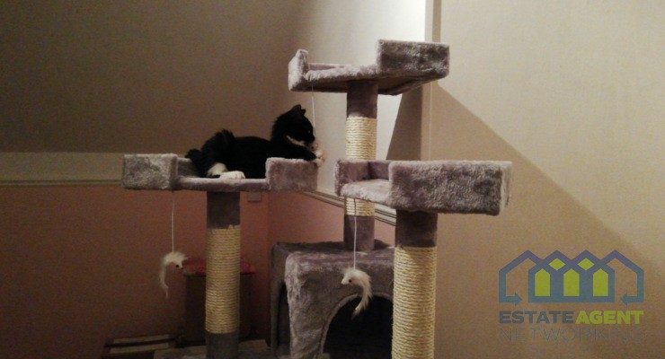 Cat Trees and Scratching Posts