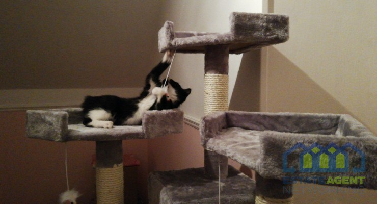 Cozy Pet Cat Tree Grey