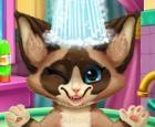 Baño de gatito