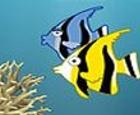 Escapar del arrecife