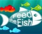Alimenta al pez