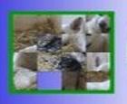 Cambiador de Flash - Perro y Gato