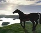 Carreras de caballos en 3D
