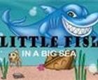 Pez pequeño en un mar grande