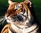 Tiger Slider Puzzle Game