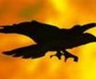 Cuervo en el infierno