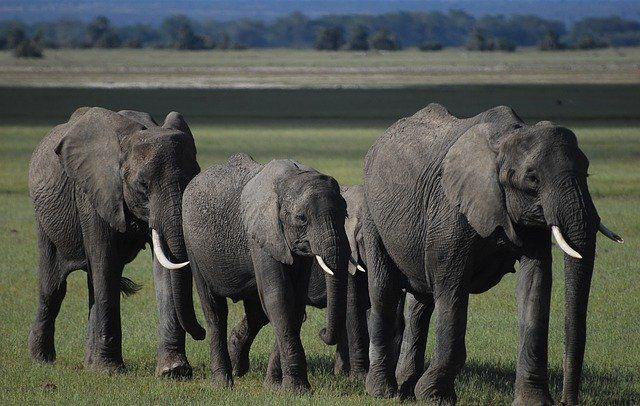 elephants-4499210_640